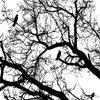 treesbnw