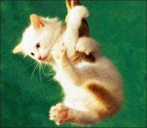 Wallpapere cu pisici – Poze cu pisicute dragute