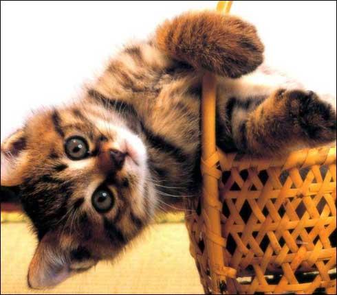 Wallpapere cu pisici - Poze cu pisicute dragute | Hot Wendy