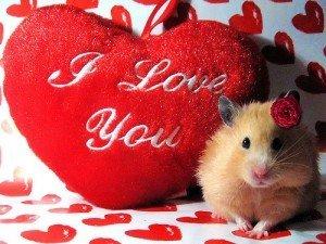 Mesaje de Sfantul Valentin 2011