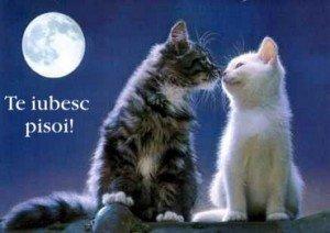 "Statusuri frumoase de ""Noapte buna!"" pentru persoana iubita – Statusuri Messenger"