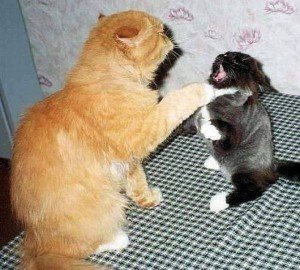 Poze super amuzante cu animale – Poze funny cu animale si copii