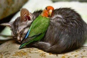 Cei mai buni prieteni: Poze haioase cu animalute