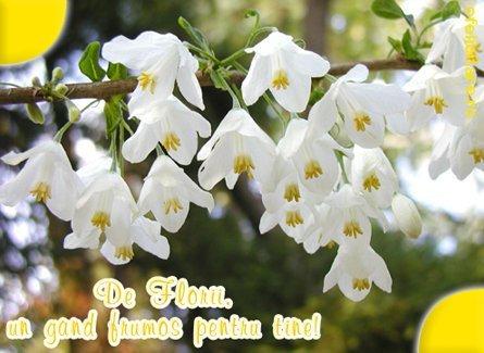 Mesaje, sms, urari si felicitari de Florii