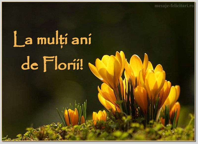 florii mesaje