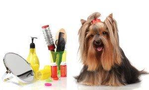 Servicii toaletaj canin Bucuresti – Servicii de toaletaj canin la domiciliul clientului