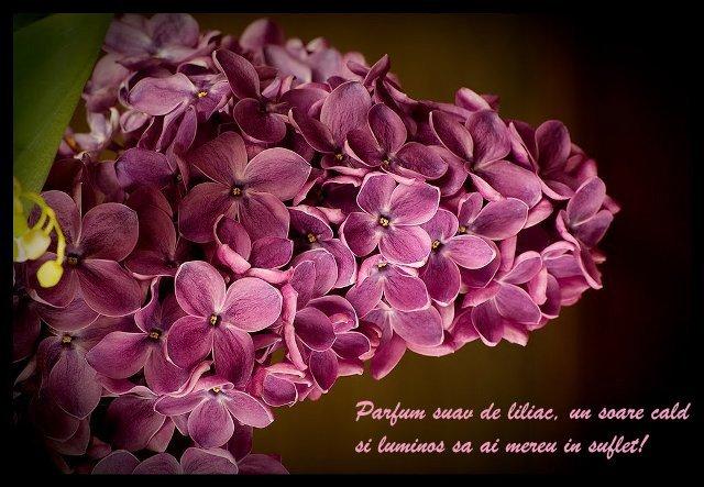 felicitari-de-florii7