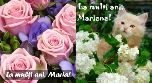 felicitari sf maria3