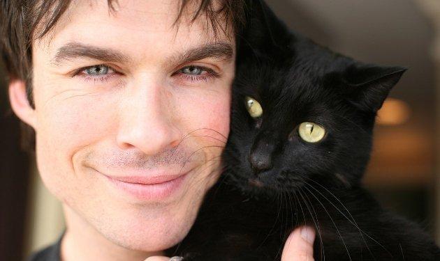vedete care iubesc pisicile